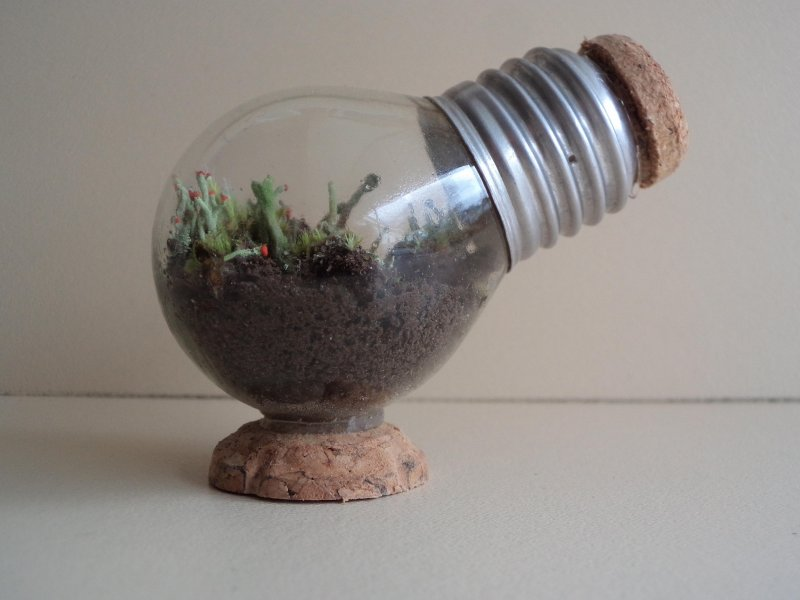 Mini Terrarium Project